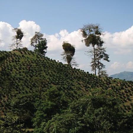 Káva Bolívia