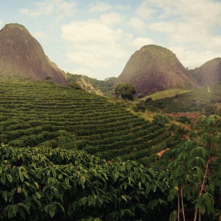 Káva Brazília