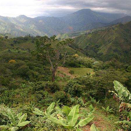 Káva Dominikánska Republika