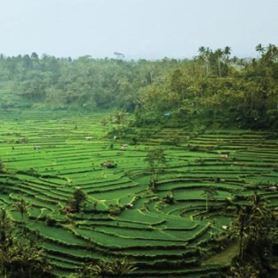Káva Indonézia