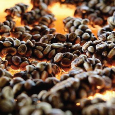 Káva Kopi Luwak (cibetková)