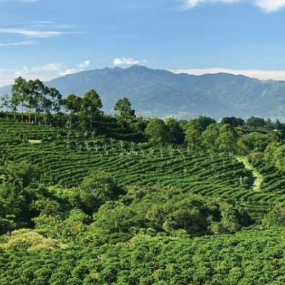 Káva Kostarika